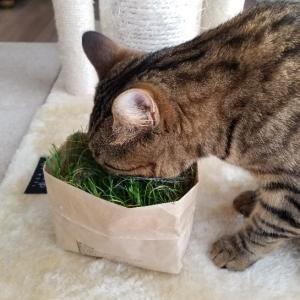【無印良品】にゃんこが夢中!猫草栽培セット