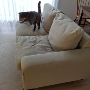 【オキシクリーン】ソファのシミ抜きしてみた