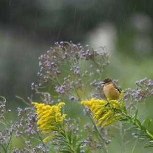 雨になりました