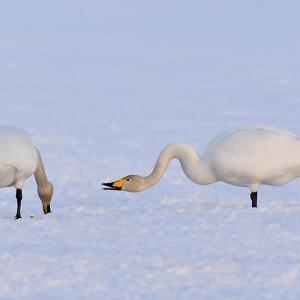 しばらく冬の写真を