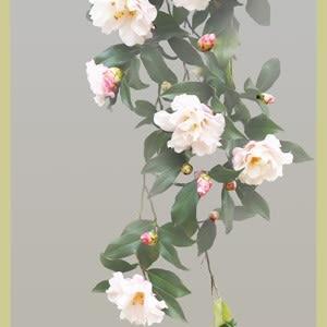 優雅に咲くサザンカ