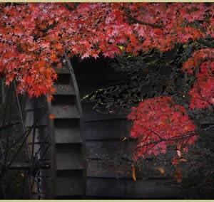 水車茶屋周辺、大人の紅葉
