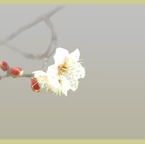 思い出・梅は花より枝振りが粋だ①