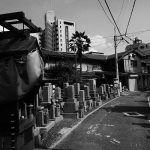 近所へ散歩(野江辺り)