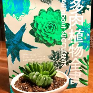 【多肉植物全書  All about SUCCULENTS】
