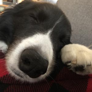寝顔に癒される日々