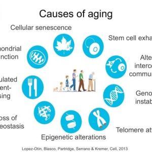 Resist to aging体の老化に立ち向かう