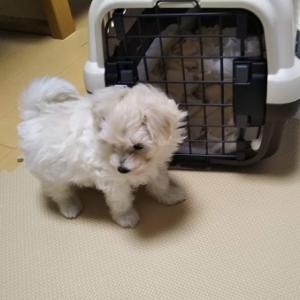 子犬がきた!