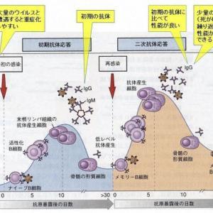 コロナ感染IgG抗体