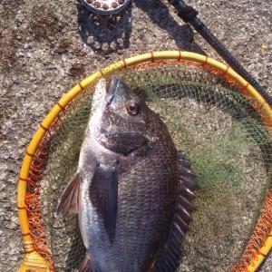寒くて渋い釣行でした。。。