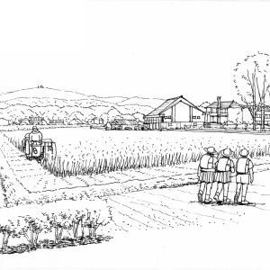稲刈りのシーズン