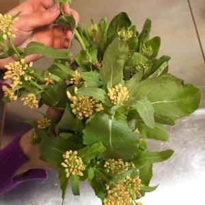 菜の花の季節 のらぼう菜とか、そっくりさん。