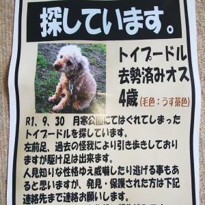 札幌のハッピーちゃん