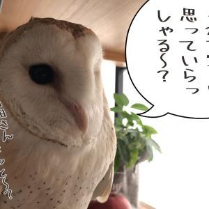 白田×鳥類の方々