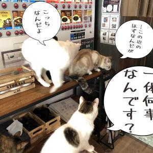 必殺仕事人…猫??