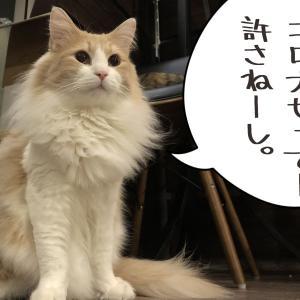 猫王休業中につき…