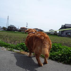 3/29 日 曇 国内新規感染者200人超す