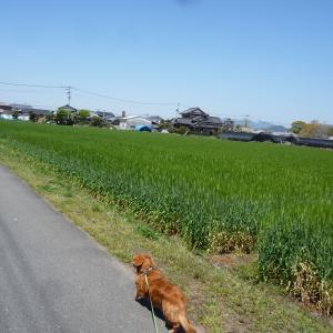 4/6 月 晴 緊急事態宣言8日発令 5月6日まで