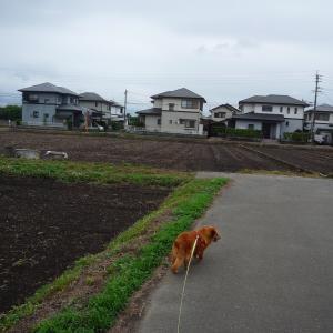6/12 金 曇後雨 2次補正予算成立