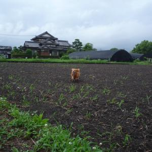 6/14 日 曇時々雨 都で新たに47人感染