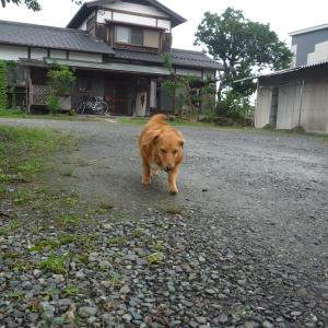7/13 月 雨時々曇 JR九州17路線345カ所被害