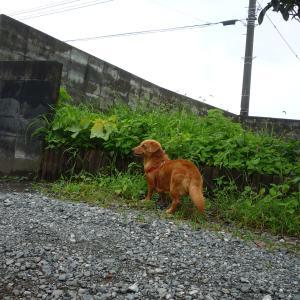 8/7 金 雨後曇 沖縄で100人感染、累計884人