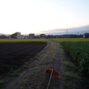 9/23 水 曇後雨 ナワリヌイ氏退院