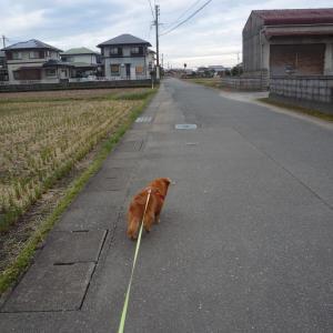 11/6 金 曇 日経平均株価終値2万4325円、29年ぶり高値