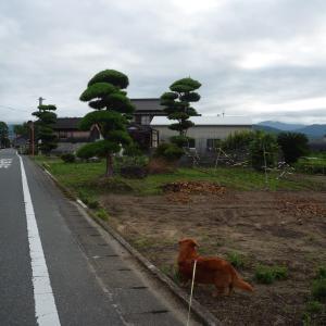 6/13 日 曇 G7閉幕