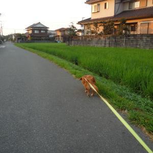 7/29 木 晴 8/31まで神奈川・千葉・埼玉・大阪に緊急事態宣言