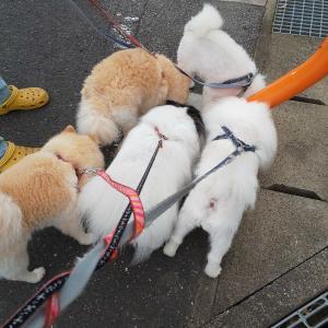 朝から5匹でわちゃわちゃ散歩