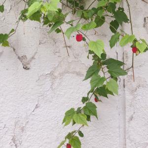 おうちごはんとぶら下がる花
