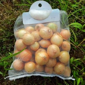 ホーム玉ねぎ 栽培その1