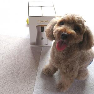 「ウチのガヤがすみません」で紹介されていたFurbo ドッグカメラをレビュー【新セール9,500円オフ情報追加】