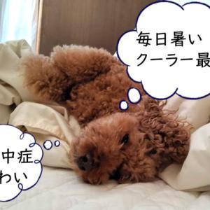 犬や猫が熱中症になったらどうすればいい?【予防策と対処方法】