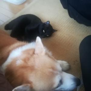 今の犬と猫は安心できない