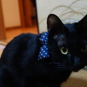 黒猫にも衣装