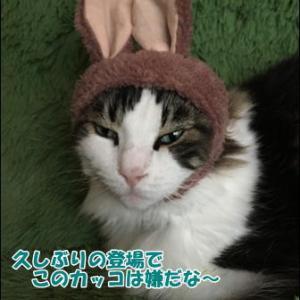 猫の術後服作り方その3