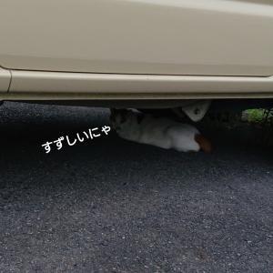 タイヤが好きな犬