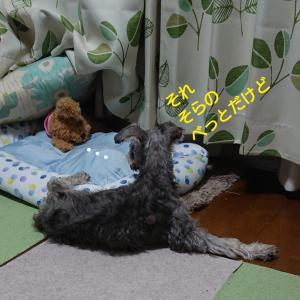 犬って時々落ちてるよね