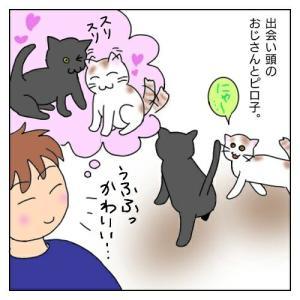 青春猫野郎は夢みるおじさんとの現実を見ない。
