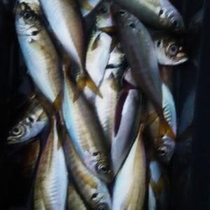海釣り大好き‼