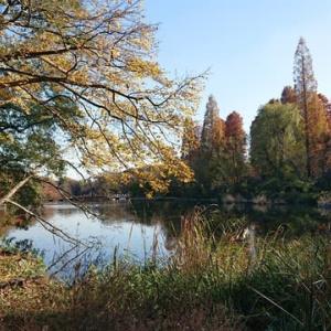 フォトグラフィー2019  autumn