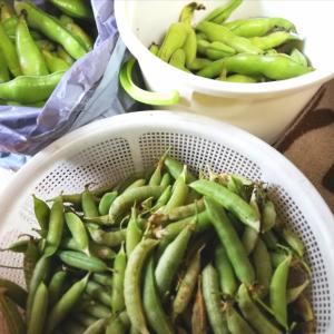 春の皮むき豆祭❣️