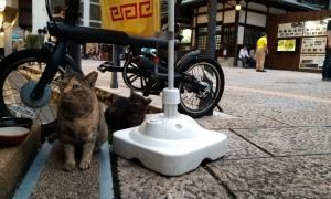 松山の猫たち