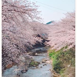 外来通院日と今年の桜