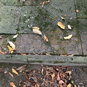 【ドイツ】テラス(石畳)の苔を取り除く実験2種類(熱湯、酢)。