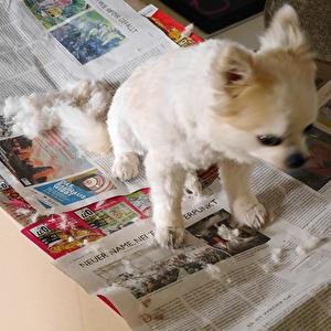 【ドイツ】オットも犬も我が家でバリカン。