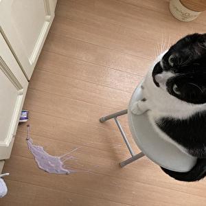 【アクシデント】朝の惨状を猫が見守る。