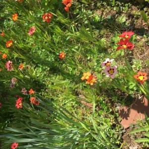 20200404  荒れ庭に咲いてくれた花